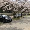 『姉川パーク』東海 穴場キャンプ場 お花見キャンプ