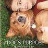 【映画】運命の犬、運命の飼い主 ~ゴールデンレトリバーの飼い主が観た『僕のワンダフルライフ』~