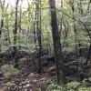 坊ガツル〜三俣山 森林と荒野と硫黄の臭い