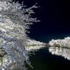 来年もここに来たい。青森・弘前公園の桜を見に行ってきた!