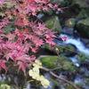 華やかな香嵐渓の紅葉も良いけど、落ち着いた雰囲気の王滝渓谷の紅葉もなかなか良い