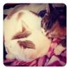 ネコと私のネムネムマンボ