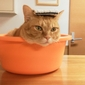 週イチ銭湯通いがメモしておく、昔の銭湯といまの銭湯にたくさんある「違い」のこと