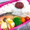 ヨメさん弁当〜塩鮭・肉豆腐〜