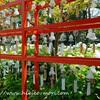 【2018】新潟白山神社の夏祭りをレポート