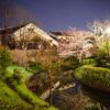 月桂冠裏の夜桜を捕まえる@2019