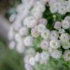 1日1花【6日目】夜の花たち