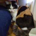 【祝・初】はてなフォトライフ。人生最初で最後の彼女の誕生日に、天下のアマゾン様から突然贈られた試供品が猫のエサだったので、没っちゃんに上げてみました。