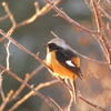 大晦日に、近所の土手で野鳥を撮影!