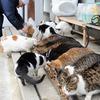 猫寺、御誕生寺の猫の供養のこと。