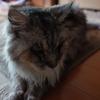 最近の猫の話(子供のためにペットを飼う事についても少し。)