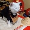 京都の猫猫寺(にゃんにゃんじ)に行って猫住職に会ってきた