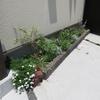 今日の庭仕事