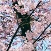 【箱根】箱根旅行記① 箱根湯本でお土産探しを兼ねて食べ歩き♪