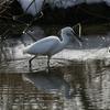 雪といえば思い出す・・鳥たちと銀世界と雪だるま