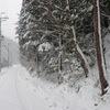 知的な雪の世界