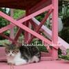 *【沖縄】沖縄在住の友達オススメ 福木並木はのんびりできるところでした!*