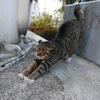 2月後半の #ねこ #cat #猫 その3