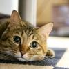 2月22日は猫の日★帰ってくる★おまじない