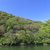 新緑は5月より4月、とはいうものの~嵯峨・嵐山の新緑~