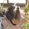 猫受難の日々