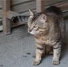 内宮からの帰り道に出会ったおはらい町の猫たち