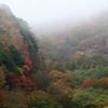 雨の日の紅葉