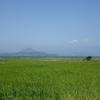 済州島(チェジュ島)4月の祭り情報 #サザエ #麦畑 #アジサイ #ルピナス