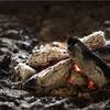 【キャンプ】炭の作り方
