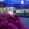 ツツジの咲く街角の夕景『千駄ヶ谷~明治神宮外苑』