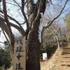 やっぱ冬は弘法山でしょ。