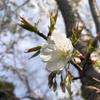 【鎌倉いいね】緊急事態宣言明けの3月の鎌倉は?