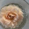 バフ・ビューティも開花。