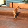 バンコクで出会った野犬くん