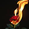 Transform anger. 怒りのエネルギーを美しい花に転換させるマインドフルネス。