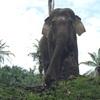 【スマトラ旅行】ゾウだけじゃない「タンカハン」の魅力。
