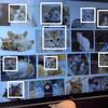 OpenCVで猫検出してみた
