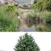 川沿いの散歩道(1)
