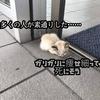猫を捨てる非道な人間。ペットショップで買う前に絶対に意識してほしいこと
