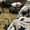 我が家の猫さん(こたつに入ればいいのに!笑)