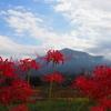 【秩父】武甲山 実りの秋の原風景、寺坂棚田と彼岸花