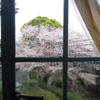 レトロな青い窓から見える桜(もういちまい!)