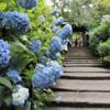 北鎌倉駅から「明月院」へのアクセス(行き方)