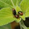 小さな甲虫?