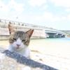 猫と海鮮丼と海ぶどうの奥武島