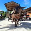 沖縄八重垣諸島旅行3泊4日 最終日 竹富島 はずせない水牛&ランチはたけの子