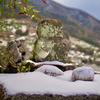 雪の中のウォーキング&初めてのコインランドリー&今日借りた10冊&おすすめのスチームクリーム&イッちゃんがんばれ!