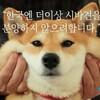韓国「柴犬人気に赤信号、ブリーダー激怒」