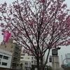 上野の桜と、赤坂『黒猫夜』の饗宴