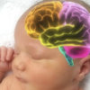 赤ちゃんの脳・聴力・視力・聴力の発達について解説します